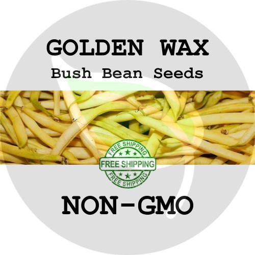 GOLDEN WAX BUSH BEAN SEEDS (Yellow) - 4 oz. + Heirloom Organic Seeds, USA - Organic Stock Photo