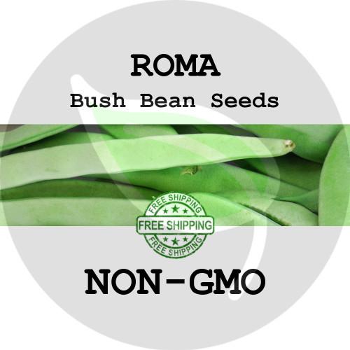 ROMA BUSH BEAN SEEDS (Green, Flat) - 4 oz. + Heirloom Organic Seeds, USA - Organic Stock Photo
