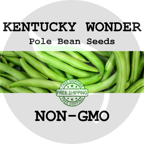 KENTUCKY WONDER POLE BEAN SEEDS (Green) - 4 oz. + Heirloom Organic Seeds, USA - Organic Stock Photo