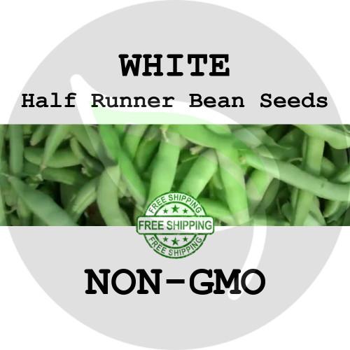 WHITE 1/2 RUNNER BEAN SEEDS (Green) - 4 oz. + Heirloom Organic Seeds, USA - Organic Stock Photo