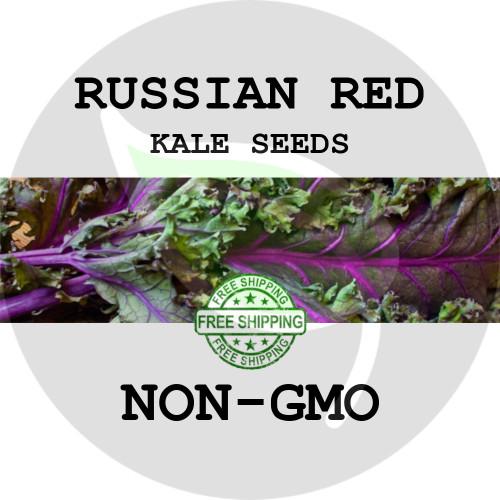 KALE SEEDS - RUSSIAN RED, 1/8 oz. + Heirloom Organic Seeds, USA - Organic Stock Photo