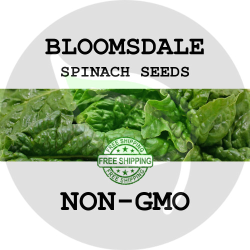 SPINACH SEEDS - Bloomsdale, 1 oz. + Heirloom Organic Seeds, USA - Organic Stock Photo