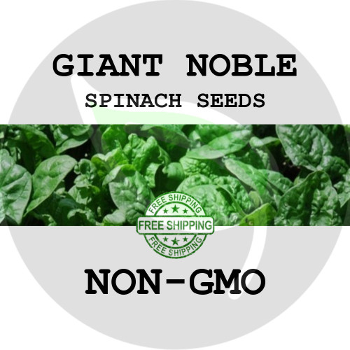 SPINACH SEEDS - Giant Noble, 1 oz. + Heirloom Organic Seeds, USA - Organic Stock Photo