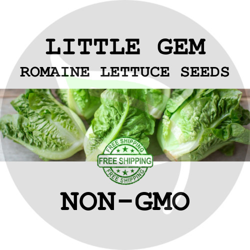 LETTUCE SEEDS - Little Gem Romaine, 1/8 oz. + Heirloom Organic Seeds, USA - Organic Stock Photo