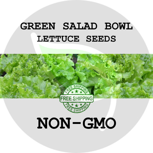 LETTUCE SEEDS - Green Salad Bowl, 1/8 oz. + Heirloom Organic Seeds, USA - Organic Stock Photo