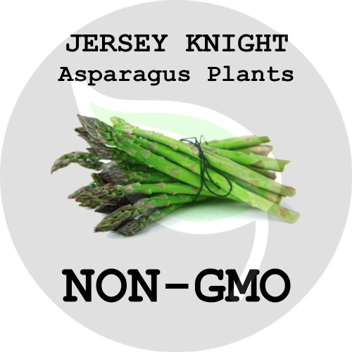 Jersey Knight ASPARAGUS PLANTS - 5+ Heirloom Organic Crowns (Plants, Roots), USA - Organic Stock Photo