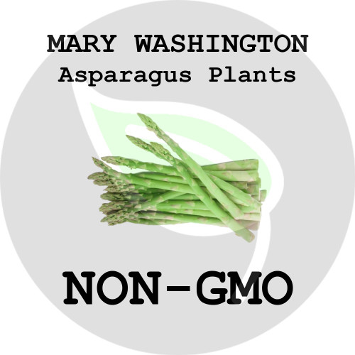 Mary Washington ASPARAGUS PLANTS - 5+ Heirloom Organic Crowns (Plants, Roots), USA - Organic Stock Photo
