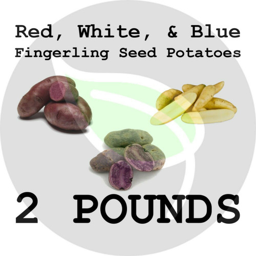 Red, White, & Blue Fingerling Certified Non-Gmo Seed Potato - 2 Pounds - Stock Photo