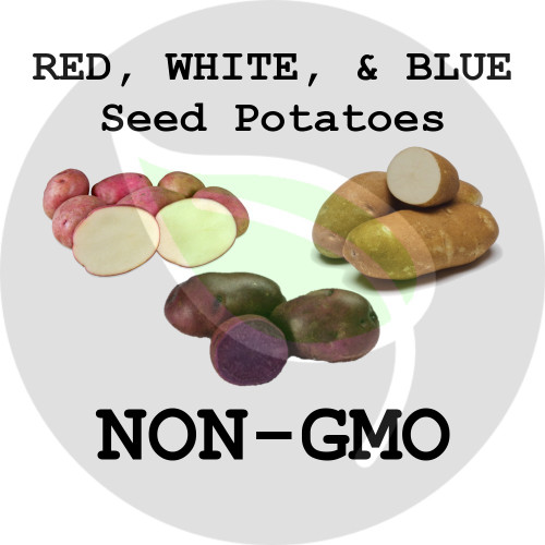 Red, White, & Blue Certified Non-Gmo Seed Potato - Lbs., Pounds - Stock Photo