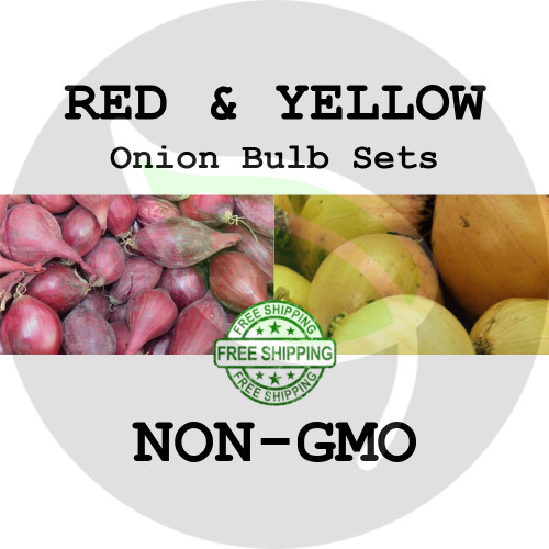 Spring & Fall Onion Bulb Sets (Mixed - Red & Yellow) - NON-GMO Seed Onions - Stock Photo