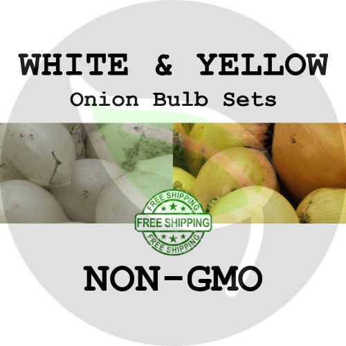 Spring & Fall Onion Bulb Sets (Mixed - White & Yellow) - NON-GMO Seed Onions - Stock Photo