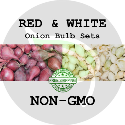 Spring & Fall Onion Bulb Sets (Mixed - Red & White) - NON-GMO Seed Onions - Stock Photo