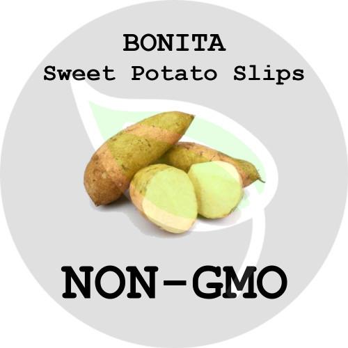 Bonita - SWEET POTATO SLIPS, ORGANIC, NON-GMO - Stock Photo