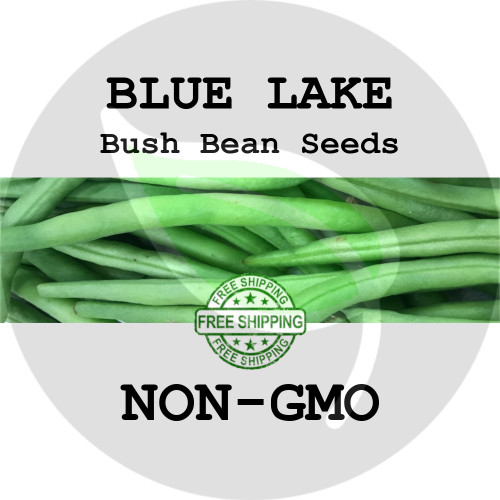 BLUE LAKE BUSH BEAN SEEDS (Green) - 4 oz. + Heirloom Organic Seeds, USA - Organic Stock Photo
