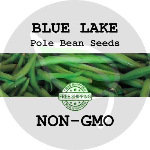 BLUE LAKE POLE BEAN SEEDS (Green) - 4 oz. + Heirloom Organic Seeds, USA - Organic Stock Photo