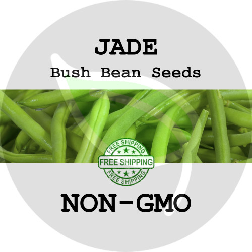 JADE BUSH BEAN SEEDS (Green) - 4 oz. + Heirloom Organic Seeds, USA - Organic Stock Photo