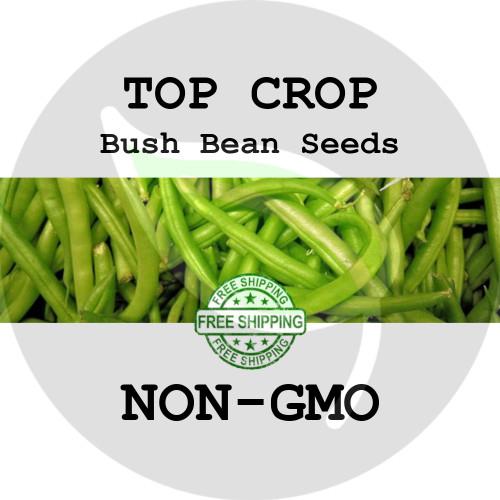 TOP CROP BUSH BEAN SEEDS (Green) - 4 oz. + Heirloom Organic Seeds, USA - Organic Stock Photo