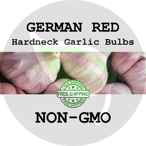 GERMAN RED GARLIC FOR SALE (HARDNECK ROCAMBOLE)   - NON-GMO Cloves, Bulbs For Seed - Stock Photo Bulk