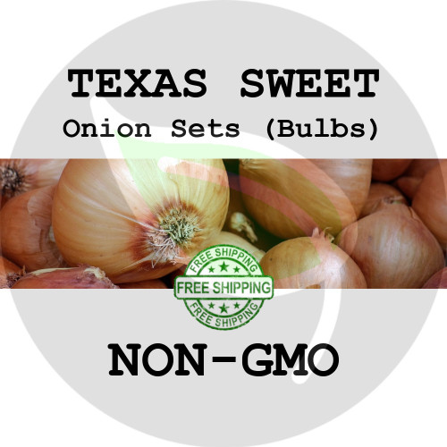 TEXAS SWEET Onion Bulb Sets (Yellow) - NON-GMO Seed Onions - Stock Photo