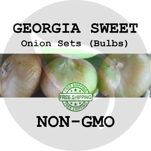 GEORGIA SWEET Onion Bulb Sets (Yellow) - NON-GMO Seed Onions - Stock Photo