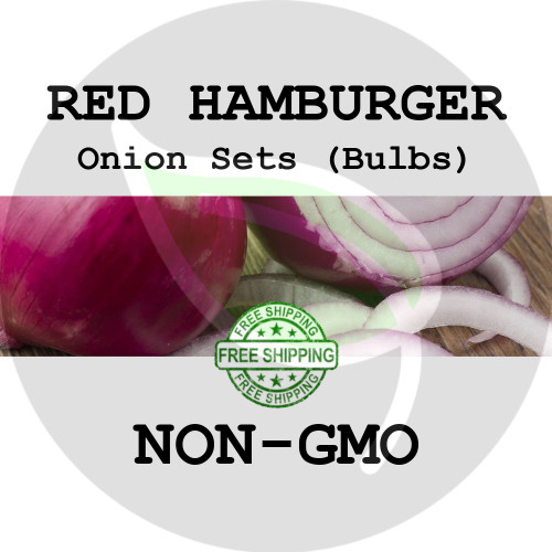 HAMBURGER SWEET Onion Bulb Sets (Red) - NON-GMO Seed Onions - Stock Photo