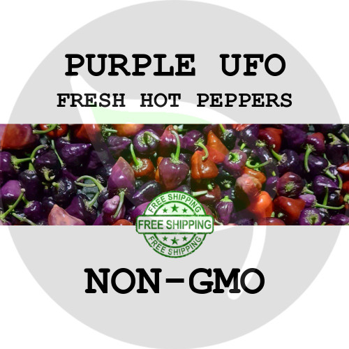 Purple UFO Pepper - 12+ Peppers - Stock Photo