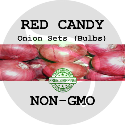 RED CANDY SWEET Onion Bulb Sets (Red) - NON-GMO Seed Onions - Organic Harvest
