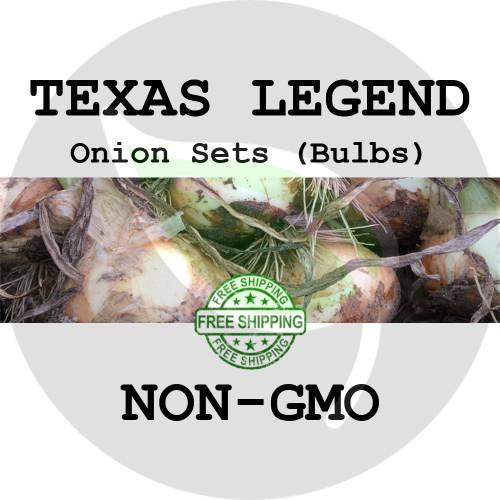 TEXAS LEGEND Onion Bulb Sets (Yellow) - NON-GMO Seed Onions - Stock Photo