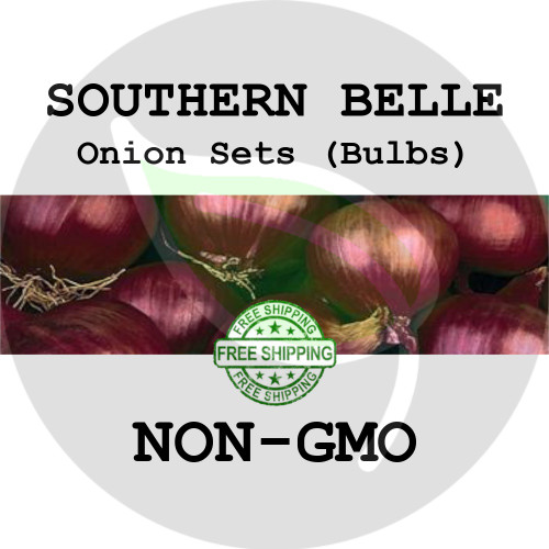 SOUTHERN BELLE SWEET Onion Bulb Sets (Red) - NON-GMO Seed Onions - Organic Harvest