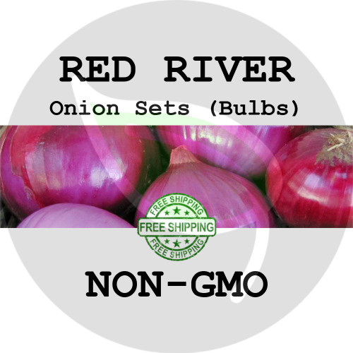 RED RIVER SWEET Onion Bulb Sets (Red) - NON-GMO Seed Onions - Organic Harvest