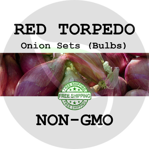 RED TORPEDO Onion Bulb Sets (Red) - NON-GMO Seed Onions - Organic Harvest