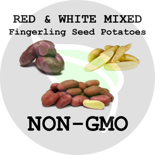 Mixed Fingerling (Red & White) Certified Non-Gmo Seed Potato - Lbs., Pounds - Stock Photo