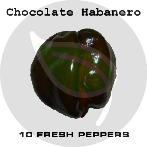 Chocolate Habanero - Stock Photo