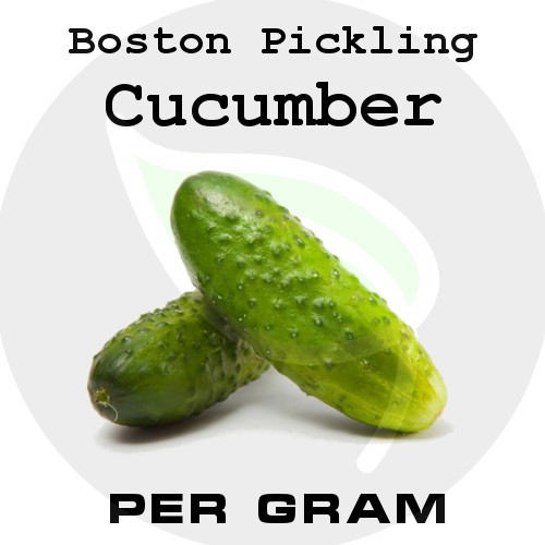 Boston Pickling Cucumber - Per Gram - Stock Photo