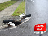 Wrong Way Wednesday: Don't be Dumb