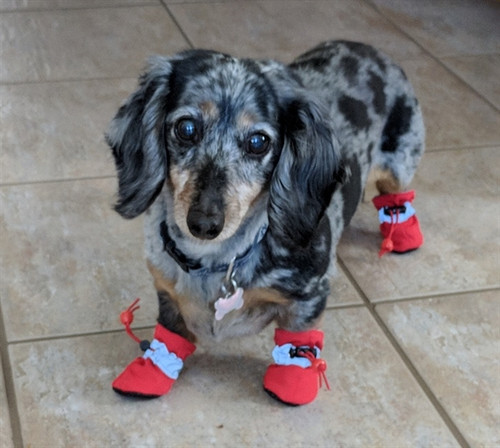 Dog Shoes Booties