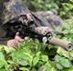 ATPIAL PEQ-15 on a designated marksman rifle