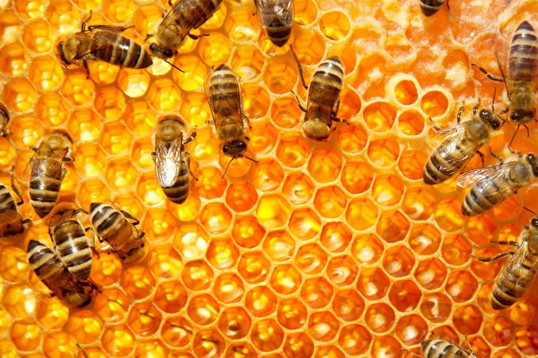 bees-6.jpg