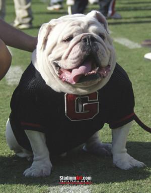 Georgia Bulldogs UGA Mascot Photo Print 07 8x10-48x36