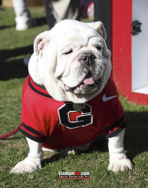 Georgia Bulldogs UGA Mascot Photo Print 08 8x10-48x36