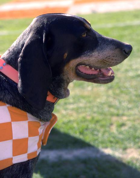Tennessee Volunteers Smokey Mascot 04 Vols NCAA College Football CHOICES