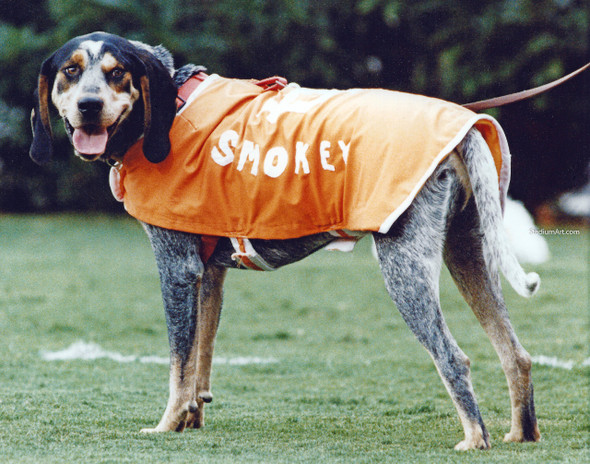Tennessee Volunteers Smokey Mascot 16 Vols NCAA College Football CHOICES