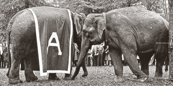 Alabama Crimson Roll Tide Elephant Mascot College Football Photo 50 8x10-48x36