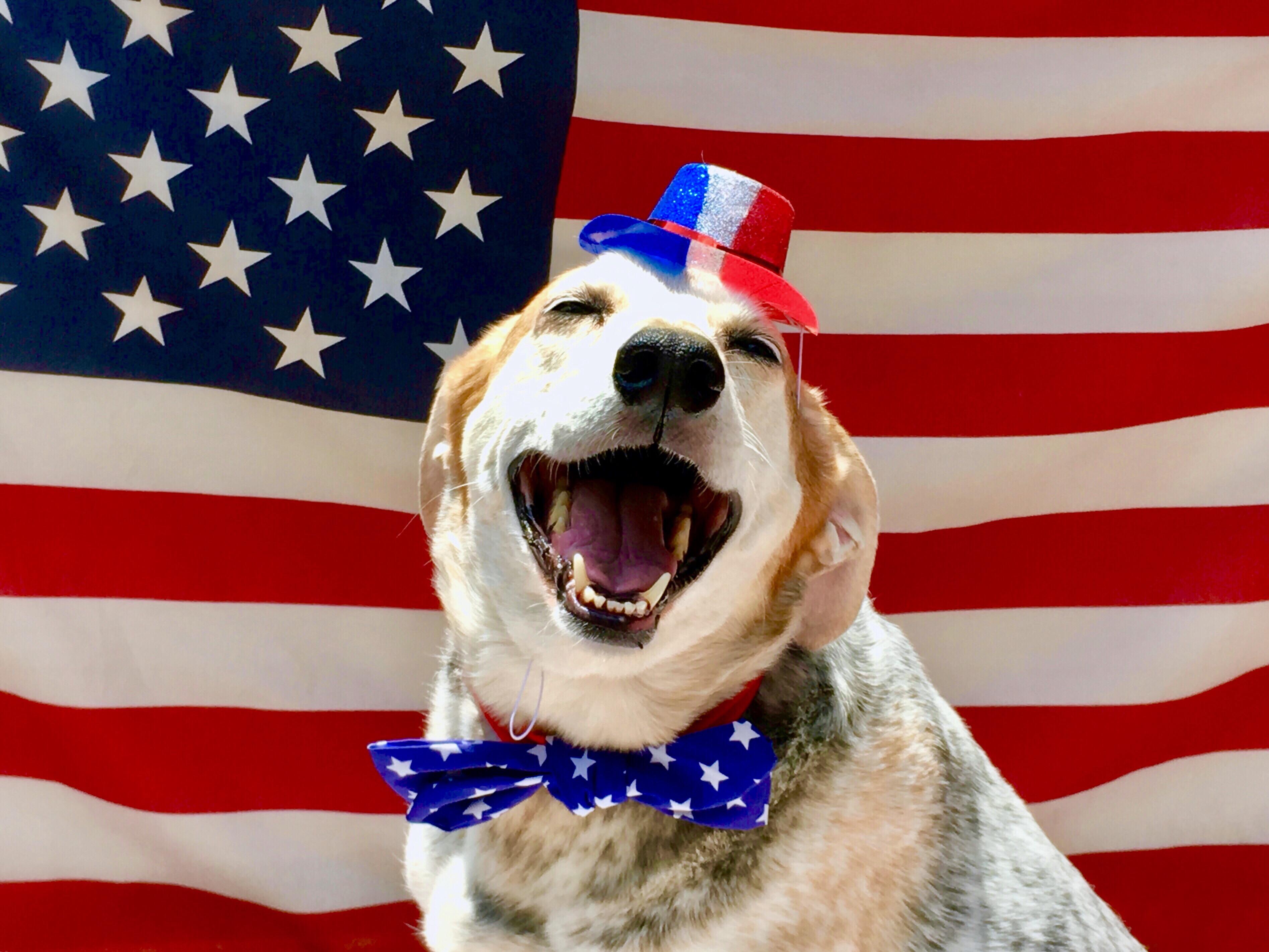 happy-fourth-of-july-dog-in-stars-and-stripes-atti-z4d6g5q.jpg