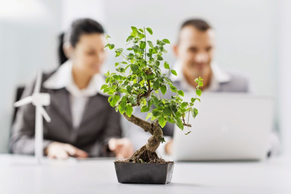 Why Plants Are Important to Your Office Space