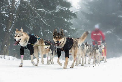 Keeping your dog active in the cold