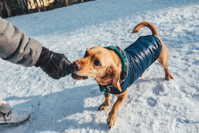 Does My dog need a winter coat and boots?