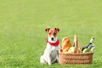 Taking your Dog on a Picnic