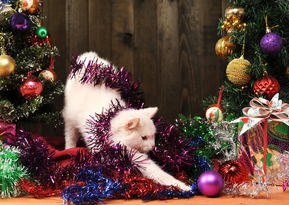 What your cat loves about the holidays and how to ruin his fun, (by keeping him safe).