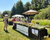 Rare Plant Fair